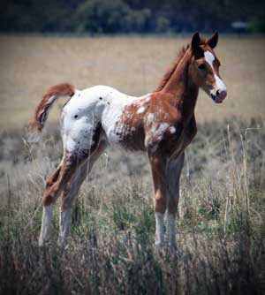 FIRST FOAL
