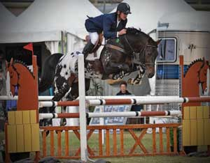 top jumping horse