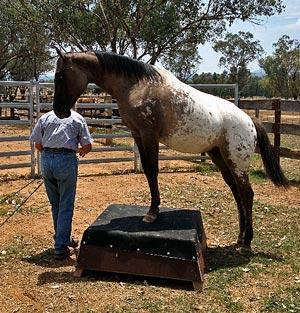 circus horse too