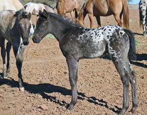 hate foals and droughts!