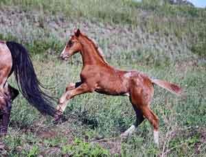 stunning colt