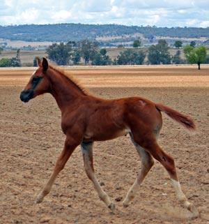 will make a super mare