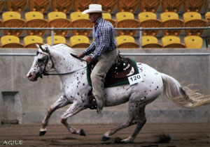 a talented mare