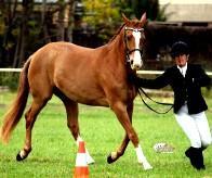 champion mare